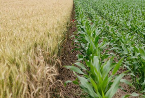 Folyamatosan emelkedik a termőföld ára